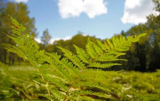 Ferns and sky.