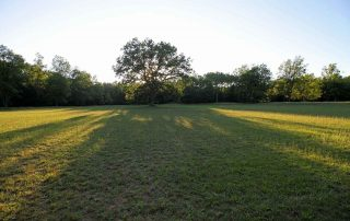 Long view of the Night Stage bowl and the Mother Oak.