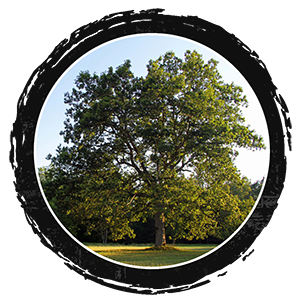 Come sit under the Mother Oak this Summer 2018 when you come for day visits, volunteer or host on The Land.
