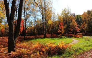 Autumn on The Land