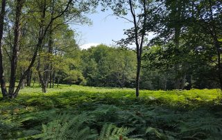 The ferns field at Triangle.